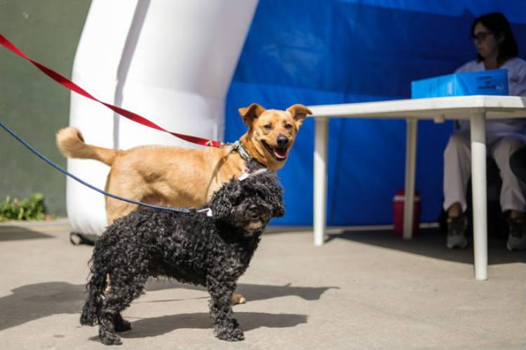 Cómo reaccionan las mascotas al modificarse sus rutinas por el aislamiento