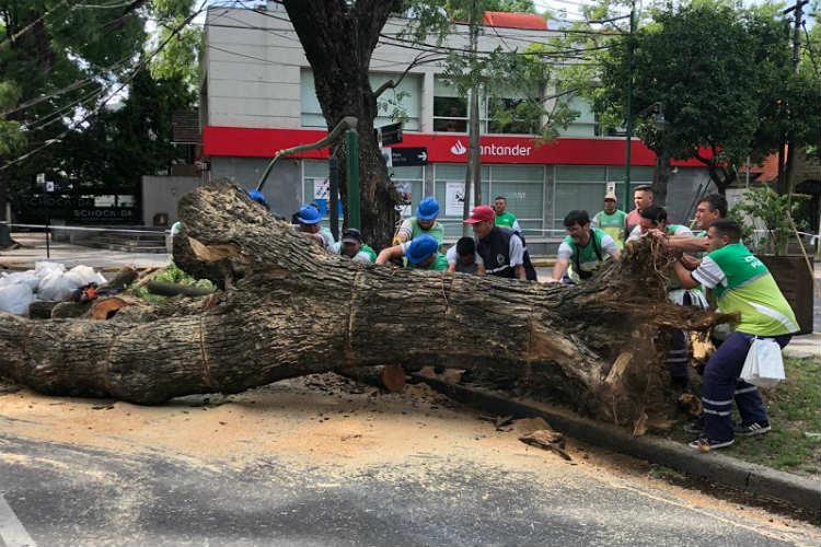San Isidro: reabren el tránsito en av. Del libertador tras la caída de un árbol de 30 metros