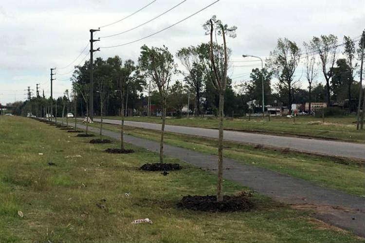 En Tigre se plantaron más de 1500 árboles para un Ambiente más sustentable.