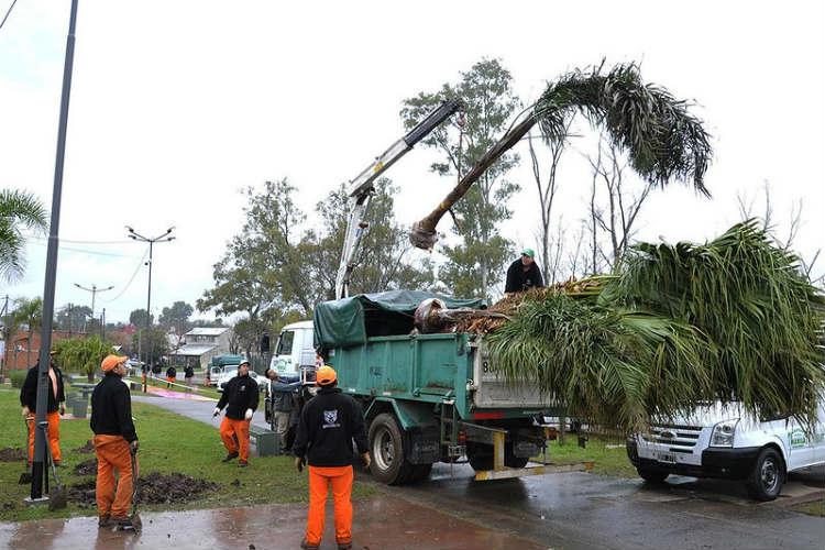 En Tigre se plantaron más de 1500 árboles para un Ambiente más sustentable