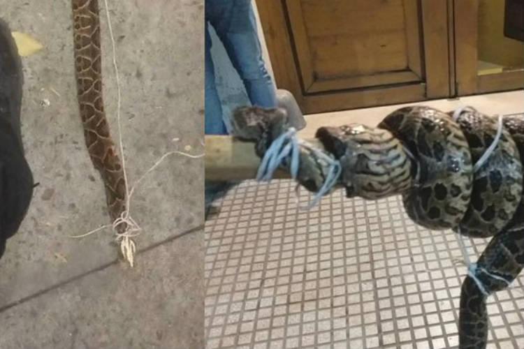 Un hombre fue encontrado convulsionando con una yarará muerta a su lado en Retiro