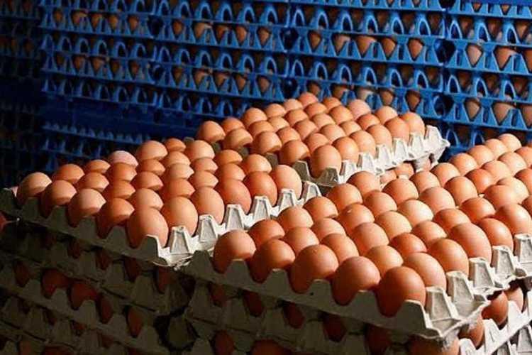Productores de Huevos responsabilizan a la cadena de comercialización por aumentos en el precio