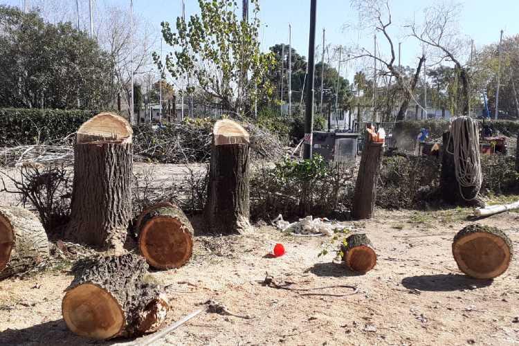 El pasado jueves 28 de mayo el Club Náutico Azopardo ejecutó la poda y extracción clandestina de siete ejemplares de álamos de 15 metros altura en la vía pública (Gaetán Gutierrez 1149) sin los permisos correspondientes