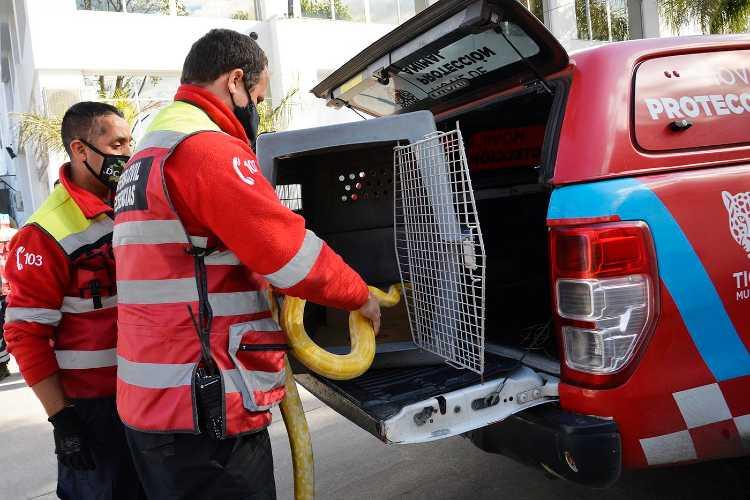 Rescatan una serpiente pitón en Tigre centro