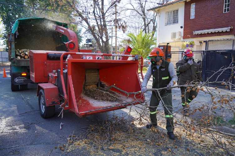 Vicente López continúa con la de poda correctiva de árboles