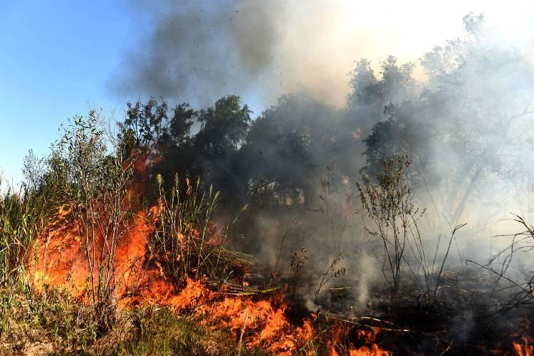 Fuego Cero: más de 7 mil personas marcharon virtualmente por los humedales