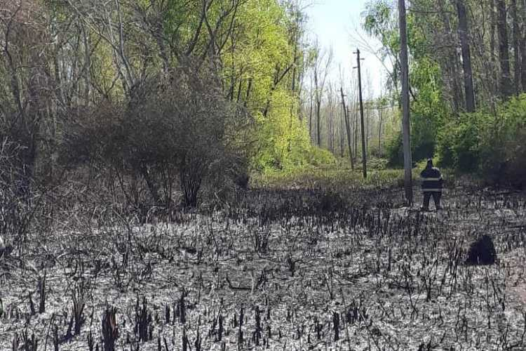 Coordinan acciones para fortalecer red de faros de conservación para prevenir incendios en el Delta