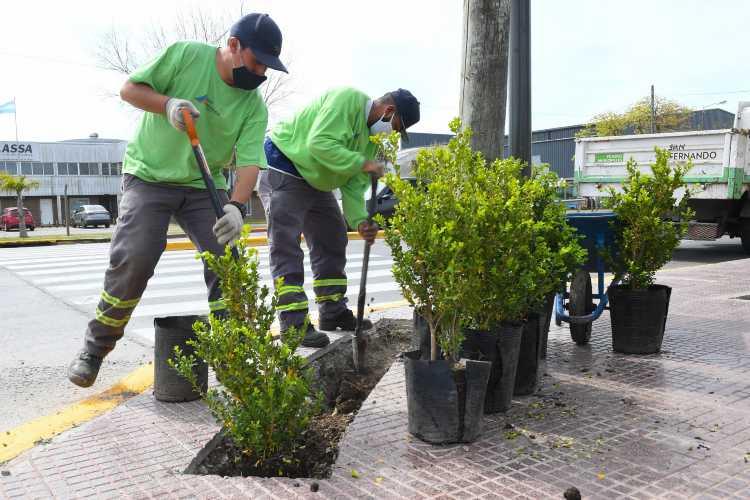 San Fernando plantó nuevos arbustos en la Ruta 202
