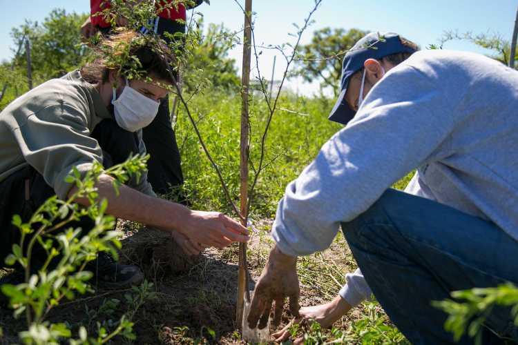 En Vicente López continúa la forestación para ayudar a combatir el Cambio Climático