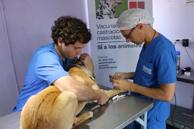San Isidro lanza un sistema de turnos online para la castración de mascotas