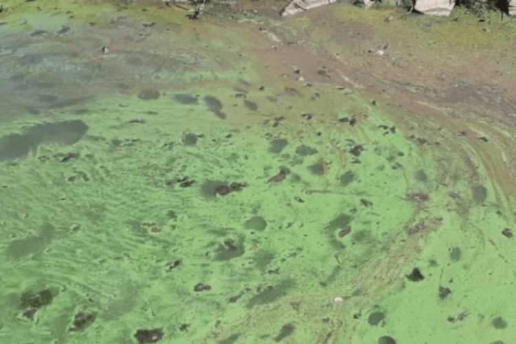 Crean una comisión para tratar el tema de las aguas verdes en el Río de la Plata