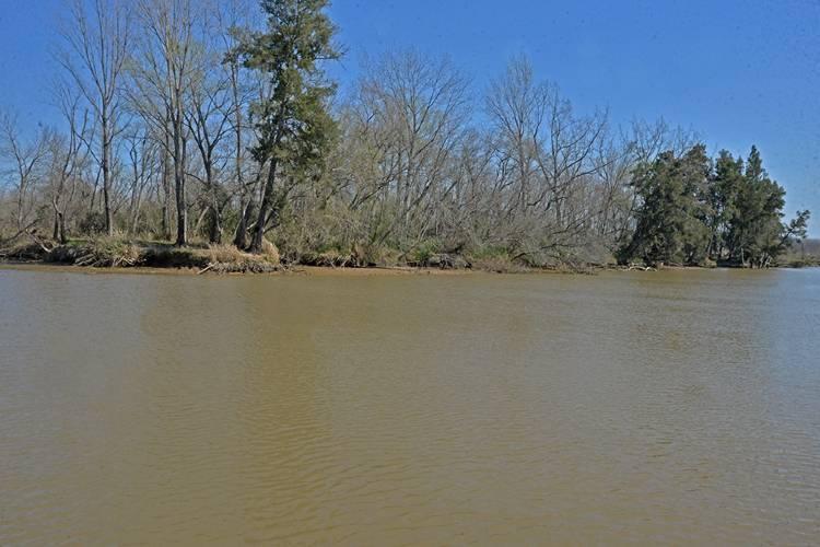 San Fernando advierte presencia de cianobacterias en el Delta y recomienda no utilizar agua