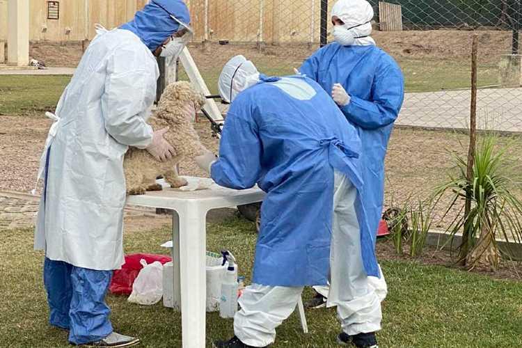 Afirman que los animales pueden adquirir el coronavirus pero no lo transmiten a humanos