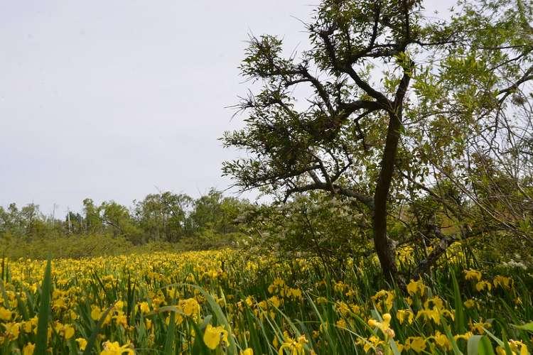 San Isidro suma nuevas áreas naturales protegidas.
