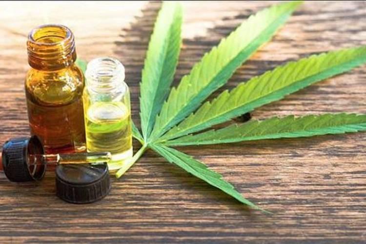 El Gobierno bonaerense presentó proyecto para la producción y comercialización de cannabis medicinal
