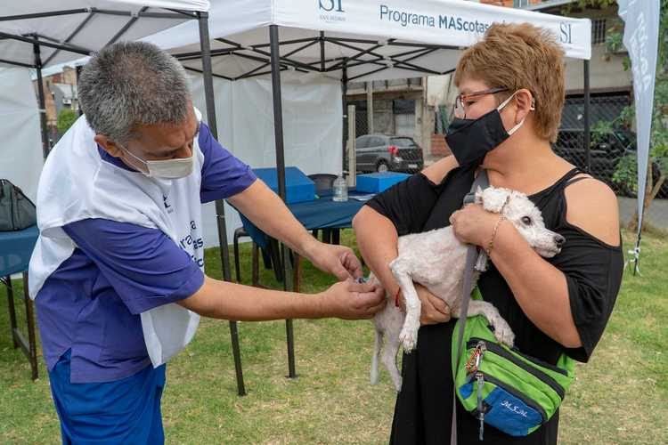 San Isidro: Dónde vacunar gratis mascotas contra la rabia