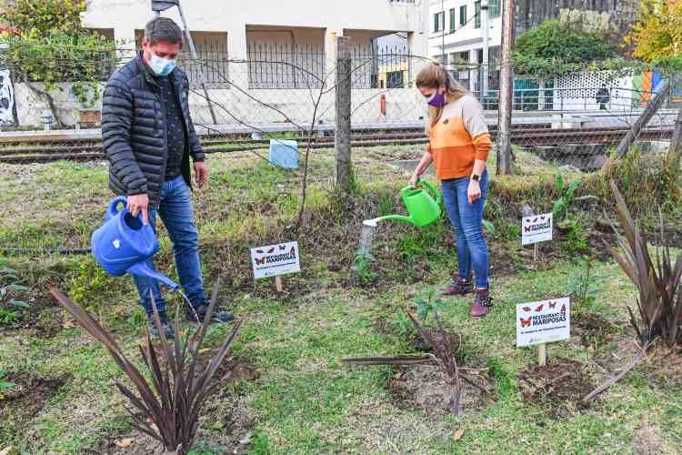 San Fernando fomenta la reproducción de las mariposas monarcas Mediante la plantación de Asclepias